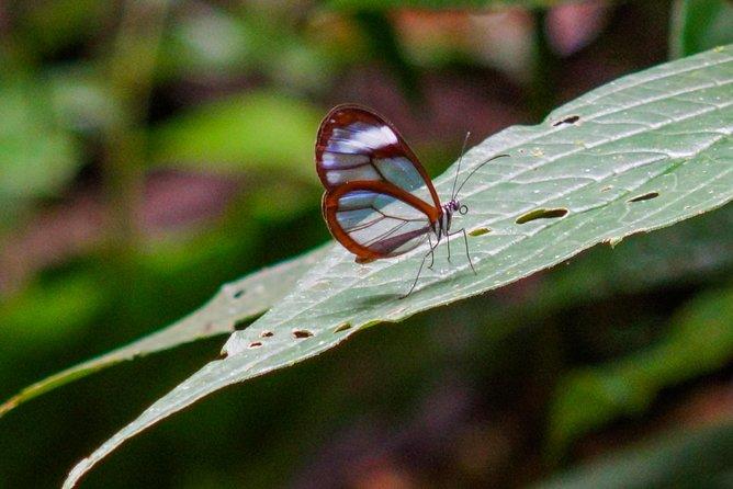 Cloud Forest Hike @ Water National Park : JUAN CASTRO BLANCO NATIONAL PARK