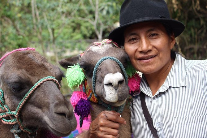 Otavalo, Cuicocha Lake and Cayambe Shared Day Tour from Quito