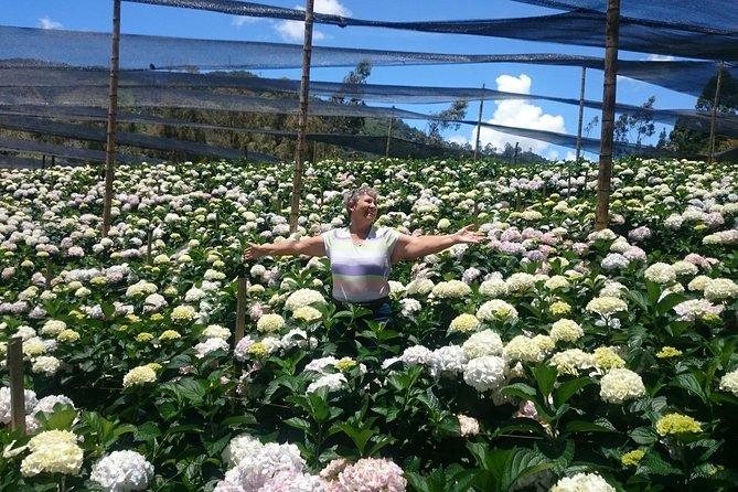 Visita privada sobre flores que incluye los traslados y el almuerzo desde Medellín