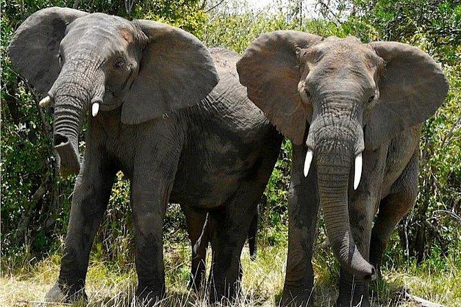 3 Day Murchison falls wildlife safari