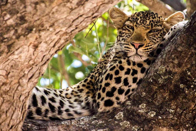 7-Day Ruaha an Amazing Adventure Safari of the Southern