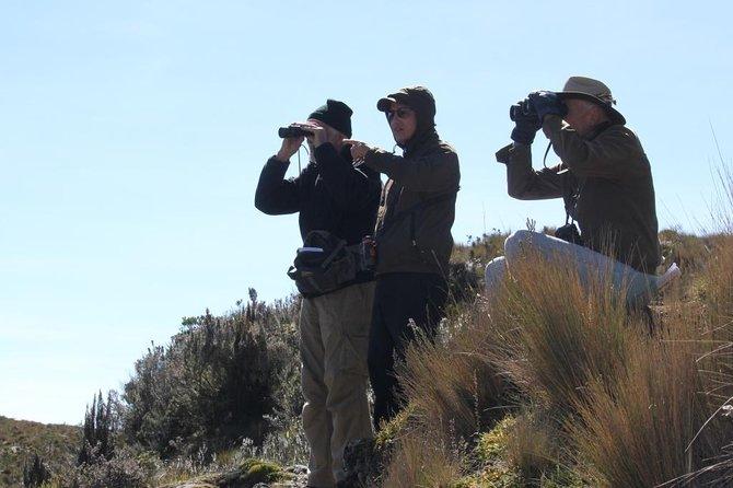 Vogels kijken in Cajas National Park vanuit Cuenca
