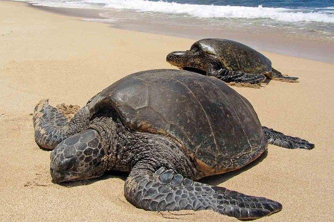 Sukamade Turtle Land Beach (2D1N)