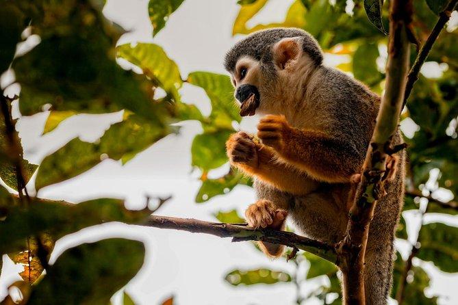 4-Day Cuyabeno Wildlife Reserve Adventure