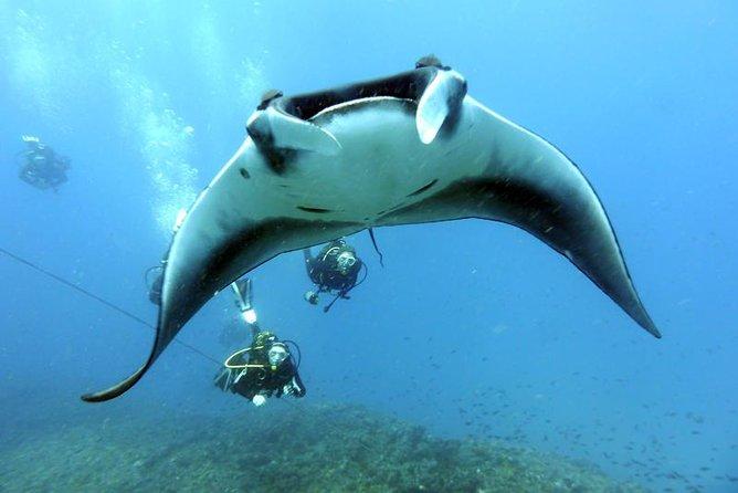 Mergulho de meio dia na Ilha de Sal
