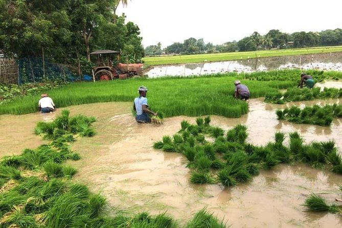 Tamil Nadu, Tanjore - Alangudi Village Experience