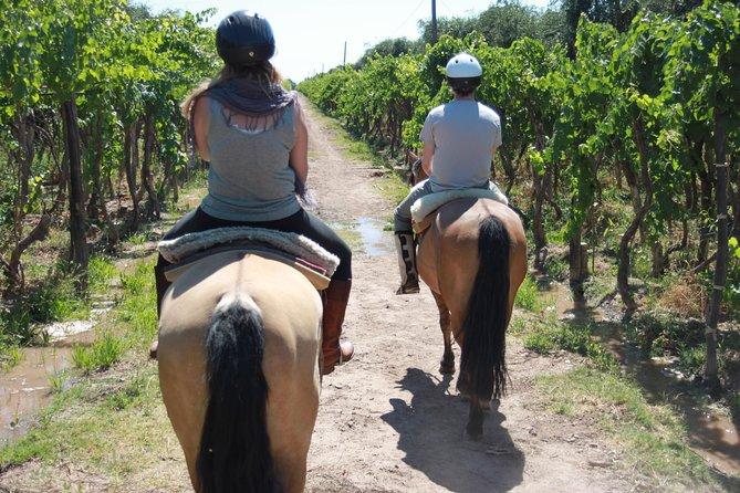 Horseback ride through vineyards followed by gourmet winery lunch