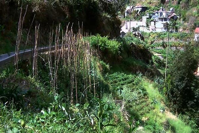 Mimosa Valley Walk