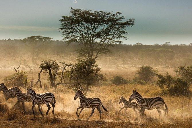 6 Days Tanzania Budget Camping Safari photo 1