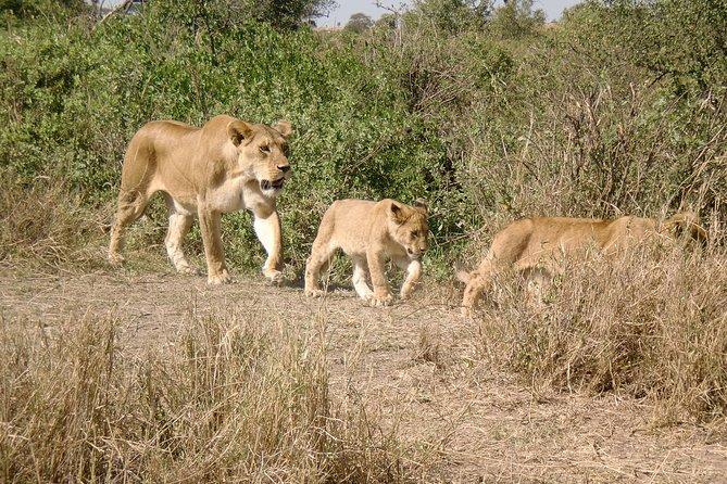 3 Days Ngorongoro Crater Tour