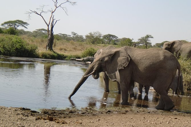 4 Days Lake Manyara, Ngorongoro and Tarangire National Park