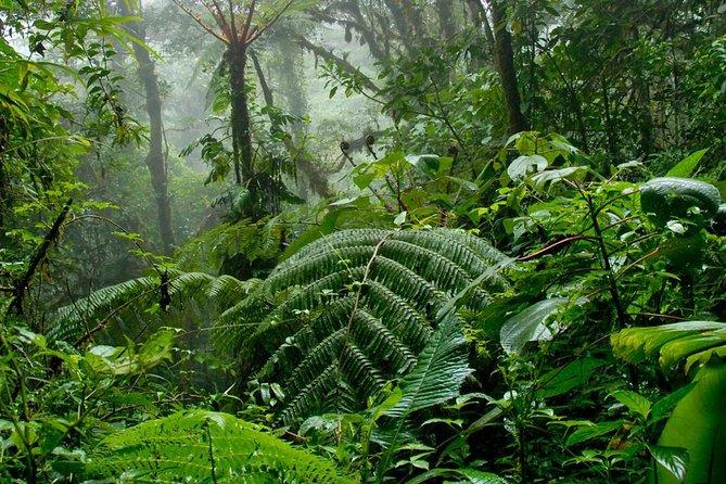 Monteverde Cloud Forrest
