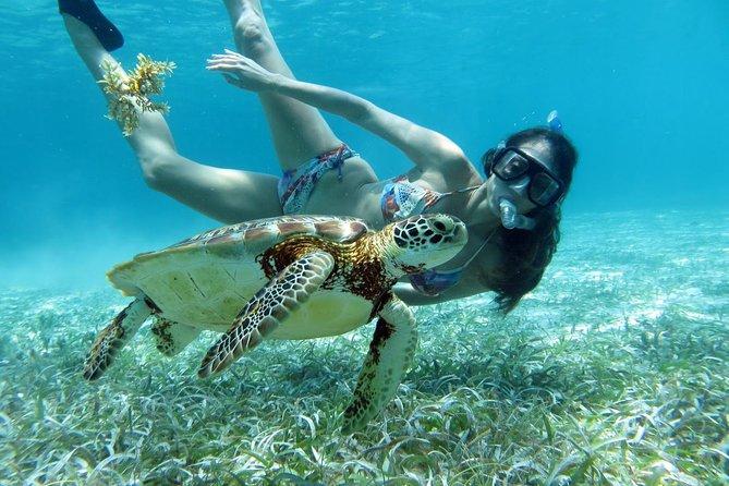 Barrier Reef Snorkel: Half Day