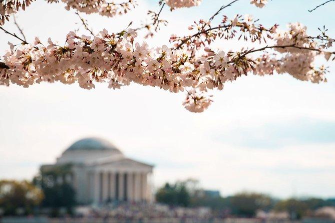 Visite des cerisiers en fleurs avec déjeuner Washington DC