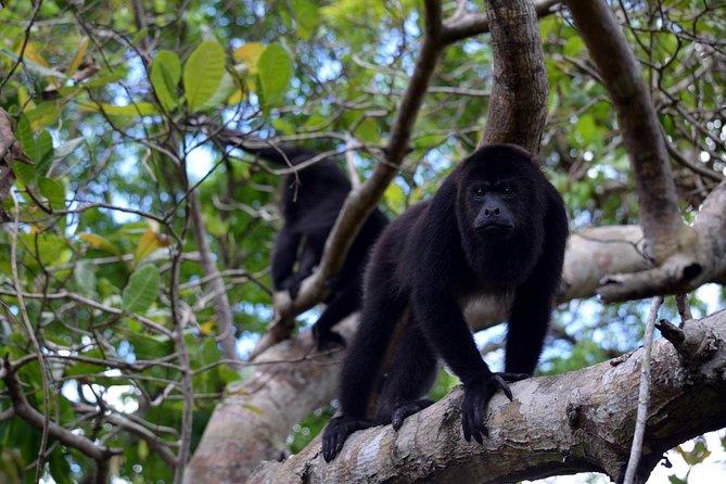 Monkey River & Manatee Watch
