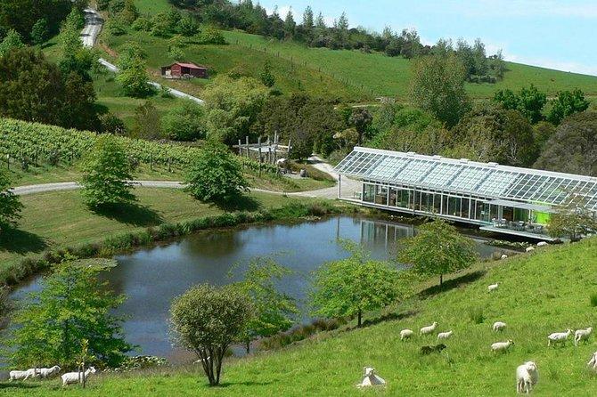 Excursão de dia degustação de vinhos da Costa Leste 'Matakana' saindo de Auckland