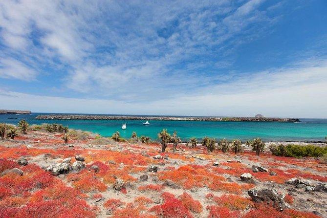 South Plazas Galapagos Day Trip