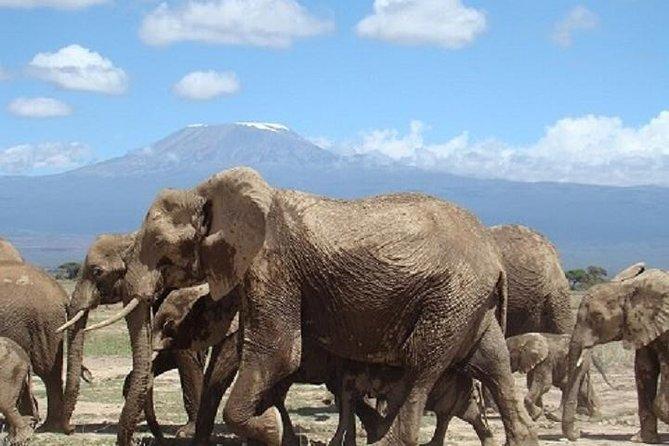 4-Days Mombasa Rendezvous Through Tsavo & Amboseli Parks- Starting From Mombasa