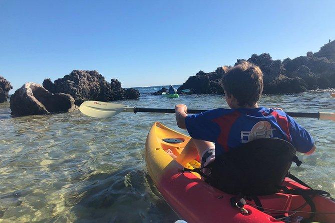 Penguin Island And Fremantle - Canoe, Chocolate & Coffee