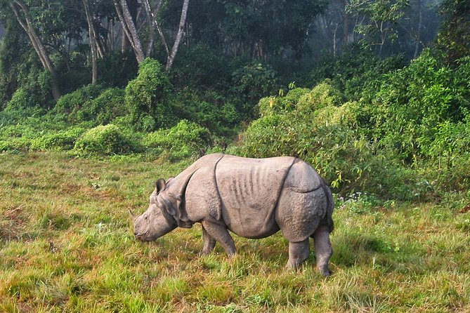 3 Nights Chitwan Jungle Safari Tour from Kathmandu or Pokhara