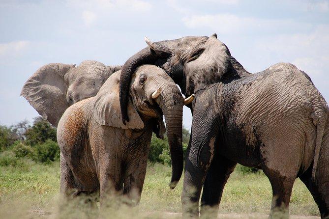 7 Days Tanzania Lodge Safari