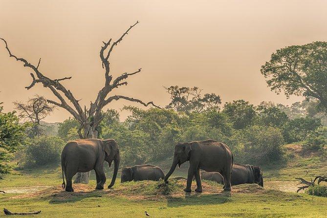 Udawalawe National Park Safari all inclusive private Day Tour