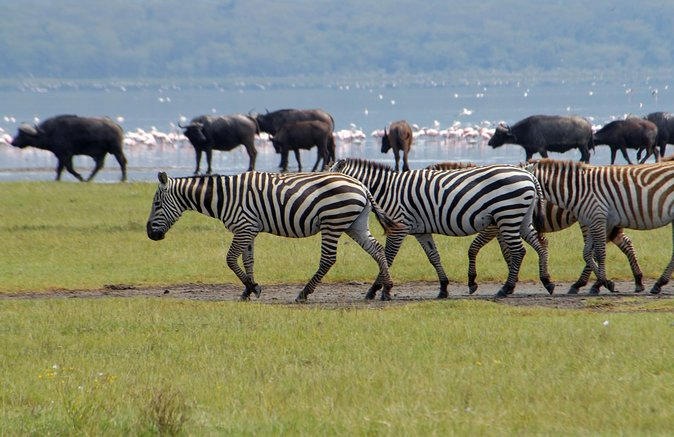 2 days lake Nakuru, lake Naivasha and Hell's gate National Park guided tour