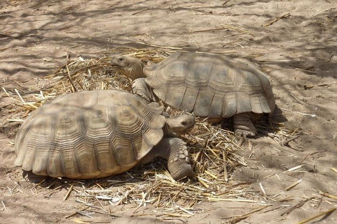 Lac Rose and Noflaye Tortoise Park