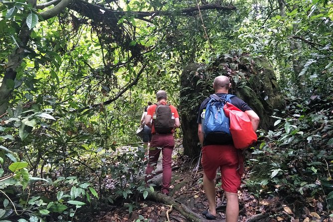 Amazing jungle trip and wildlife discovery
