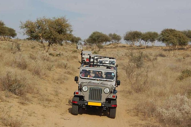 Bishnoi Village Safari In Half Day Tour From Jodhpur