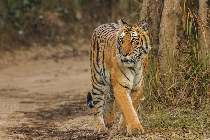 Tiger Safari at Jim Corbett National Park