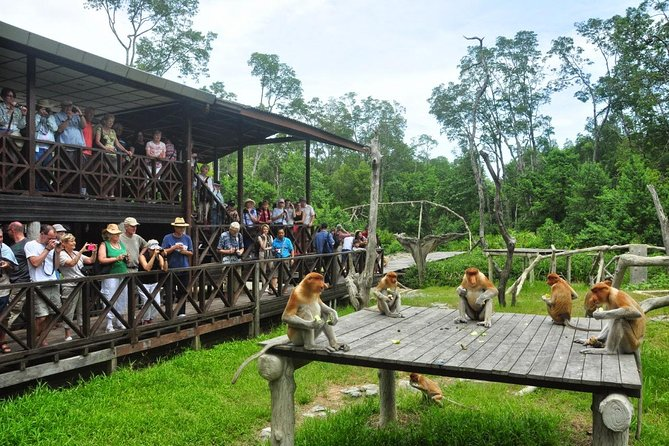 Labuk Bay Proboscis Monkey Sanctuary Admission Ticket