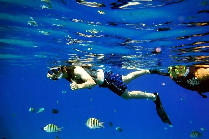 swim with fish