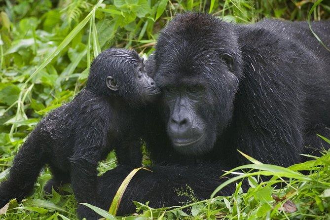 Gorilla Trek, Safari and Zanzibar Holiday