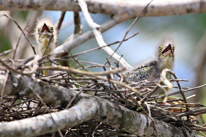 Daintree River Bird Watching