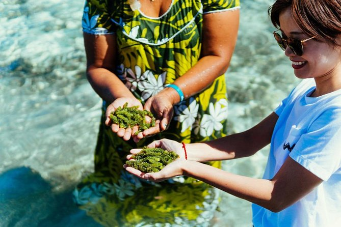 Yasawa Islands Nama Harvest, Wellness and Sightseeing Day Trip With Lunch