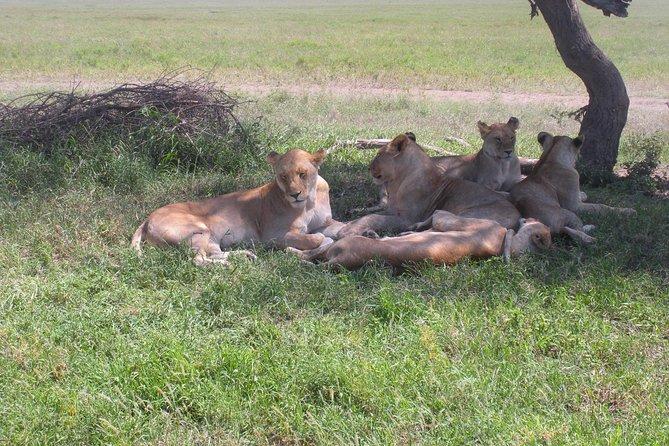 4 Day Camping Safari: Lake Manyara, Serengeti, Ngorongoro Crater