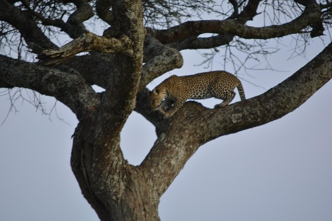 Camping 6 Days, Arusha National Park, Serengeti, Tarangire, Ngorongoro Crater