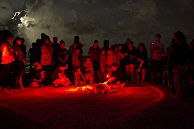 Turtle Nesting Experience @ Playa Grande National Park