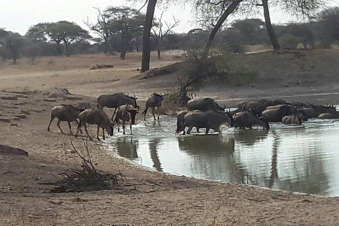 2 Days Maasai and Wildlife Short Adventure