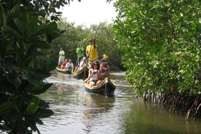 Tour de los manglares