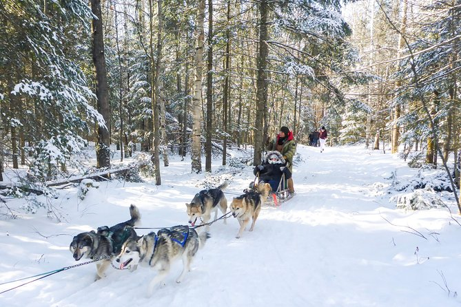 Dog Sledding, Snow Tubing and Snowshoeing Tour from Toronto