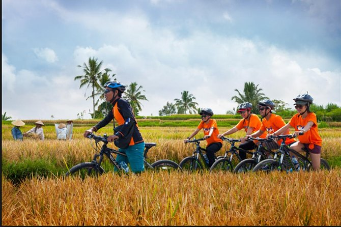 Private Tour-Cycling to the rice fields of Ubud village-Tegalalang Rice Terrace