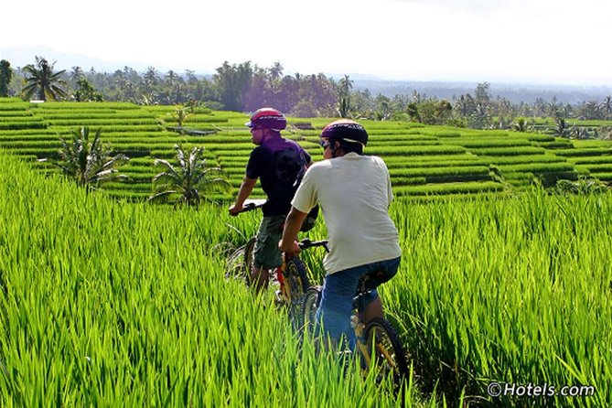 Private Tours-Cycling To The Rice Fields Of Ubud Village-Tegenungan Waterfall