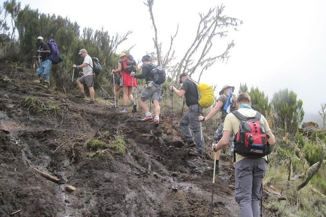 Mount Kilimanjaro Day Trip Trekking