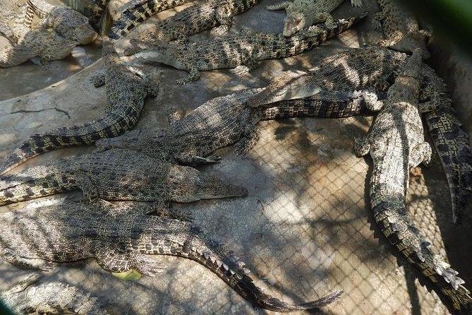 Davao Crocodiles