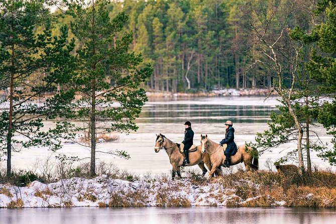 Two hour horseride in the Magical Forest of Tiveden Nationalpark