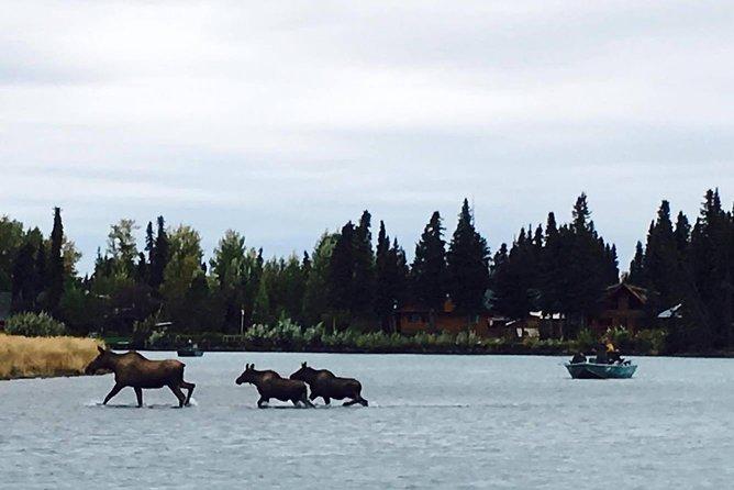 Middle Kenai River Full-Day Fishing Trip