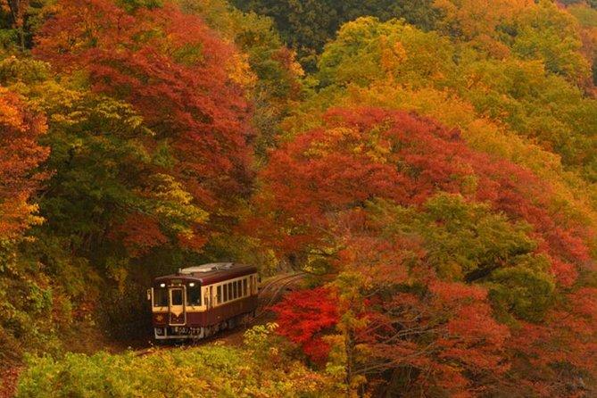 Watarase Keikoku Railway, Takatsudo Gorge,Illumination at Ashikaga Flower Park