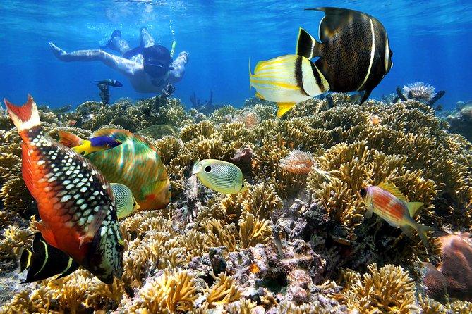 Snorkel in Rosario Islands and Playa Azul